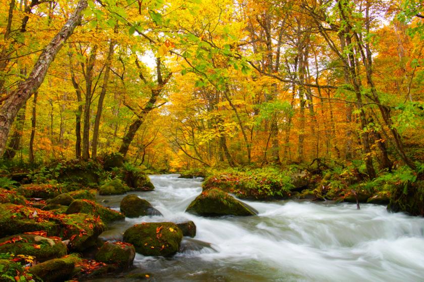 ▲秋季染色是百選紅葉之所